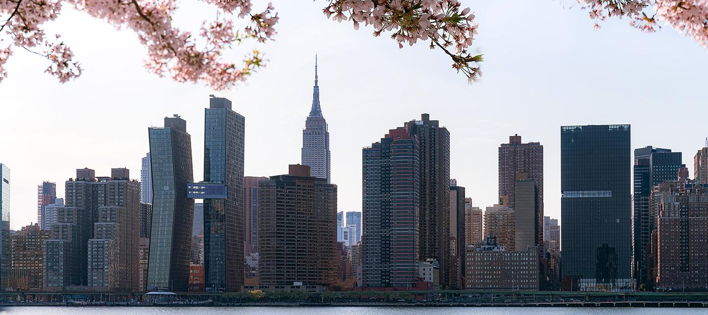 New York City skyline in Spring with Cherry blossom tree in foreground